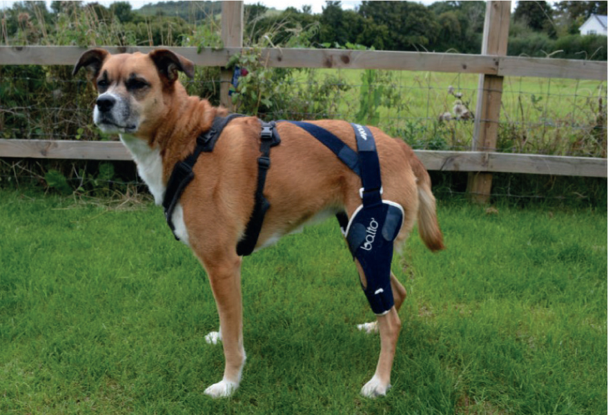 dog cruciate ligament brace