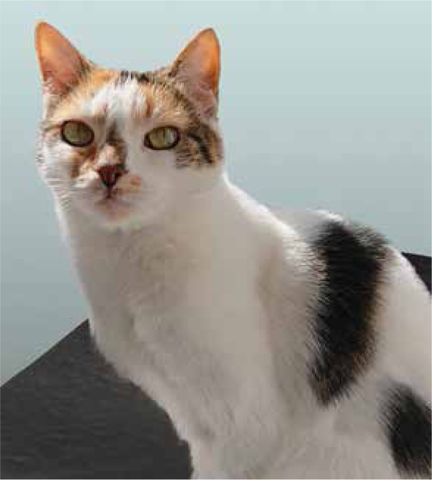 Hyperthyroidism In Cats Should We Be Routinely Testing For Early