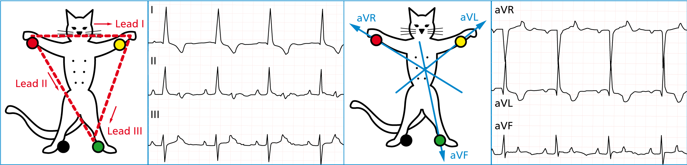 How Ecg Monitoring Contributes To Patient Care The Veterinary Nurse